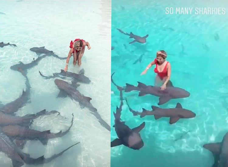 Kisu mit den Ammenhaien von den Bahamas