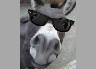 Vor diesem WhatsApp-Kettenbrief mit Esel-Bild warnen Experten