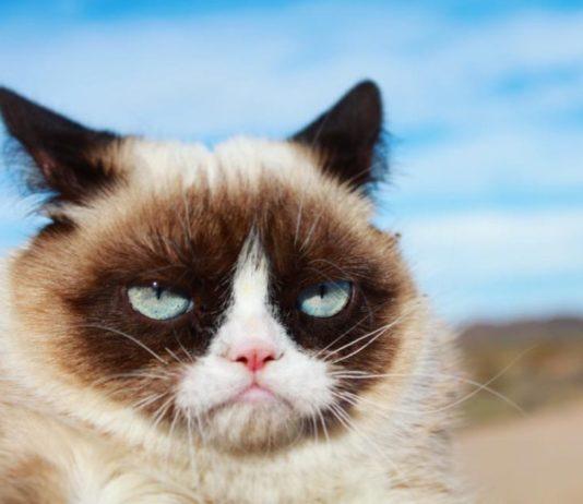 Trauer um Grumpy Cat: die erfolgreichste Katze der Welt ist tot.