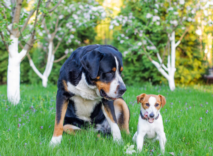 Das sind die Trends bei den Hundenamen